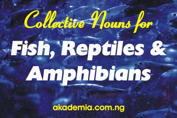 Collective Nouns for Fish, Reptiles and Amphibians