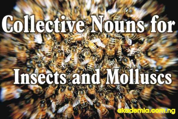 Collective Nouns for Invertebrates (Insects and Molluscs)