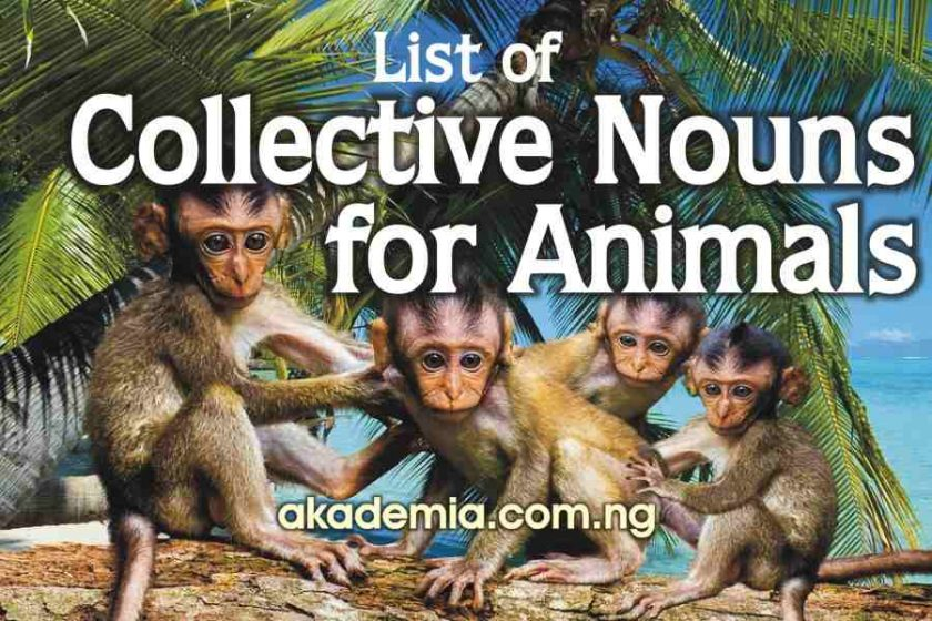 List of Collective Nouns for Animals