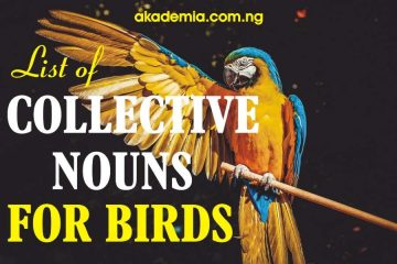 List of Collective Nouns for Birds
